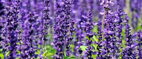 Spring Color purple flowers choosing the right flowers for your garden