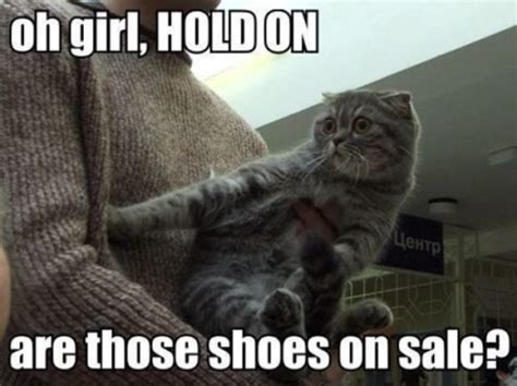 Meme Shoes For Sale - are those shoes on sale cat memes and comics