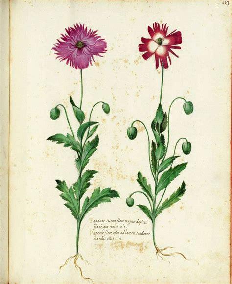 botanical flower carnation italian 11 botanical flower carnation italian 10 tattoos botanical flowers botanical