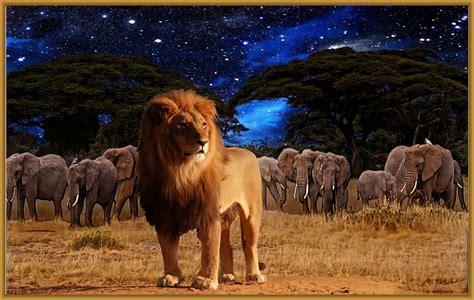 ver imagenes jpg imagenes para fondo de pantalla de leones muy llamativos