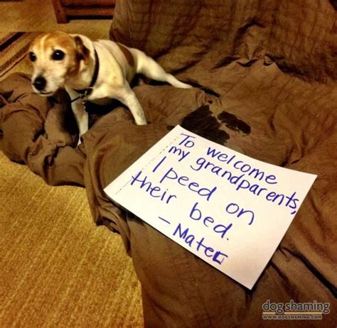 75 best images about my pet quot mater quot on pinterest 727 best images about dog shame on pinterest best dogs