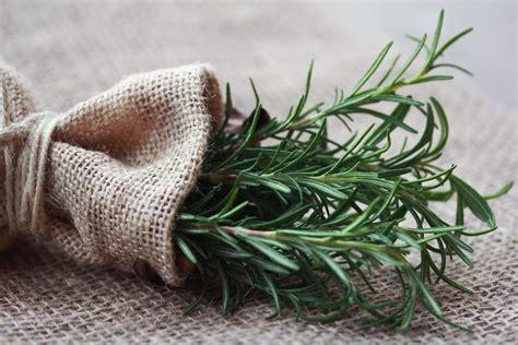 rosmarino vaso come coltivare rosmarino in casa non sprecare