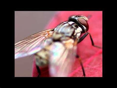 How To Get Rid Of Flies On Patio by 17 Best Images About Deterring Insects On