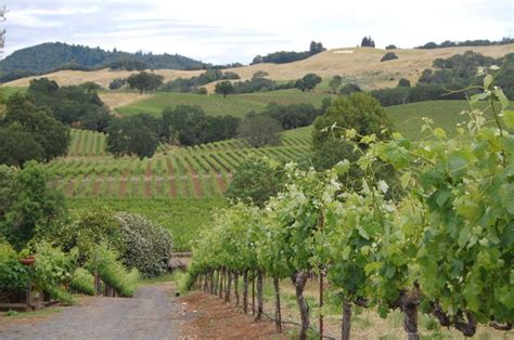 Bed And Breakfast Sonoma County Wine Country Journeys Llc Healdsburg Ca On Tripadvisor