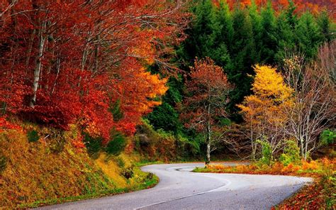 nature landscape fall road trees forest colorful