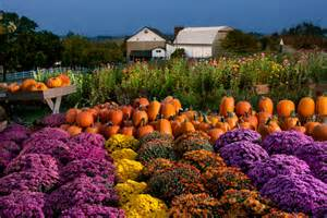 Flowers Lititz Pa - pumpkins donald reese photography