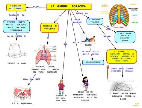 gabbia toracica mapper gabbia toracica
