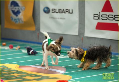 what is the puppy bowl puppy bowl 2017 meet the dogs the more photo 3853442 2017