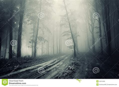 road in forest stock photo image of darkness mist road through a spooky forest with fog stock image