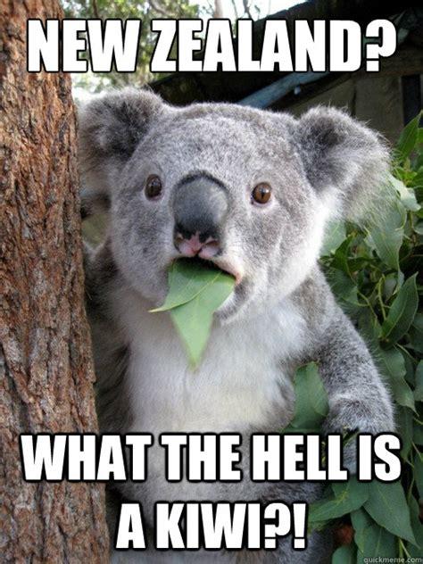 Koala Bear Meme - koala bear meme