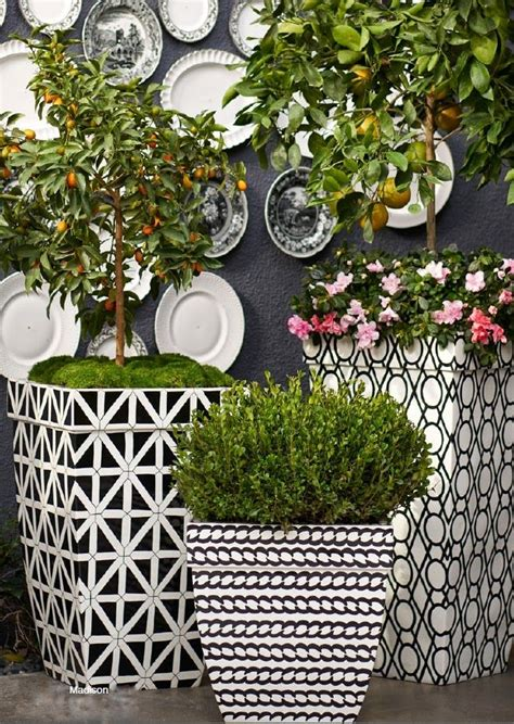Black Garden Pots And Planters by 25 Best Ideas About White Planters On Black