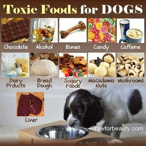 what foods are toxic to dogs toxic foods for dogs pets