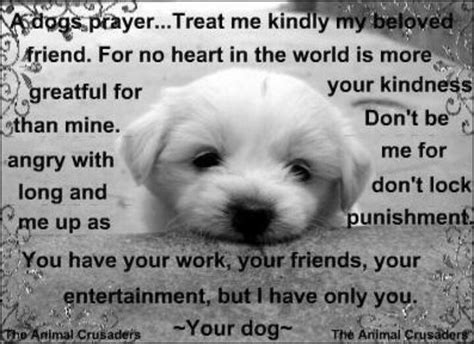 dogs prayer a s prayer all things dogs