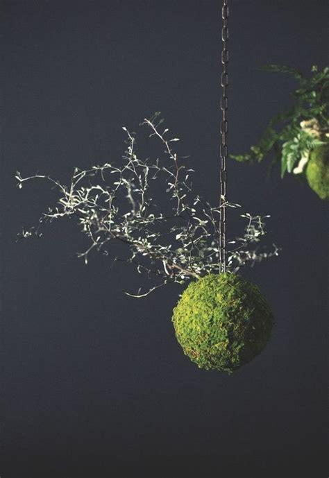 adrien benard art vegetal du kokedama hanging garden