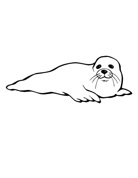 cool baby seal coloring pages special picture colouring