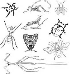 minibeasts colouring pages