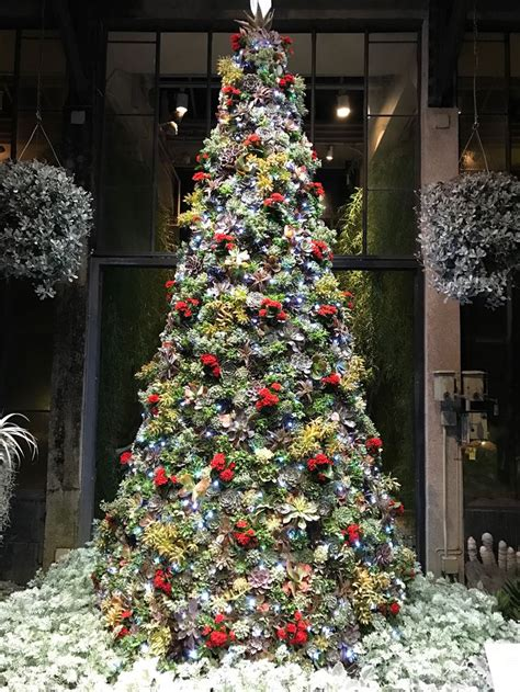 christmas tree made with all fresh succulents at longwood