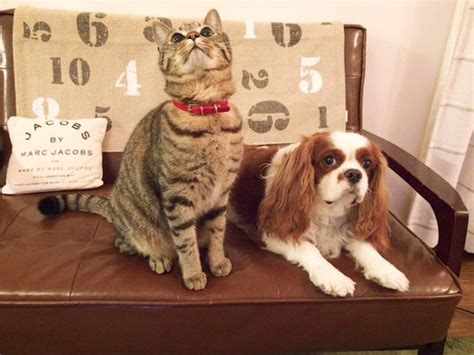 puppy and not getting along 9 breeds that get along with cats barkpost