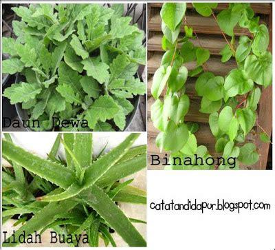 Obat Herbal Obat Maag catatan di dapur obat herbal untuk sakit maag