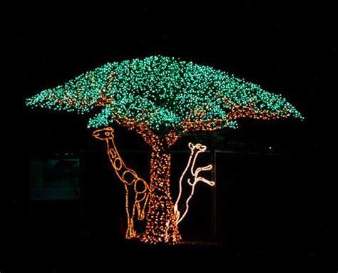 zoo light portland light up with a trip to the zoo petslady