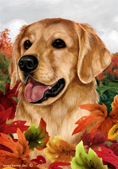 breed garden flag golden retriever fall leaves