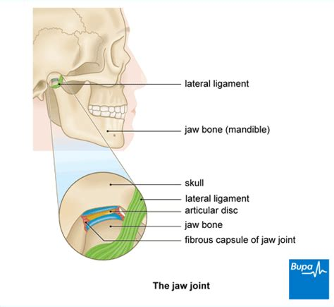 what are the causes and symptoms of jaw pain ehow jaw joint dysfunction symptoms healthcare bupa uk