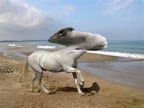 23 insane animal hybrids