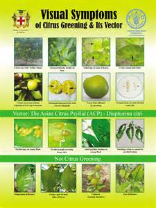 Identifying Garden Pests - moaf plant health