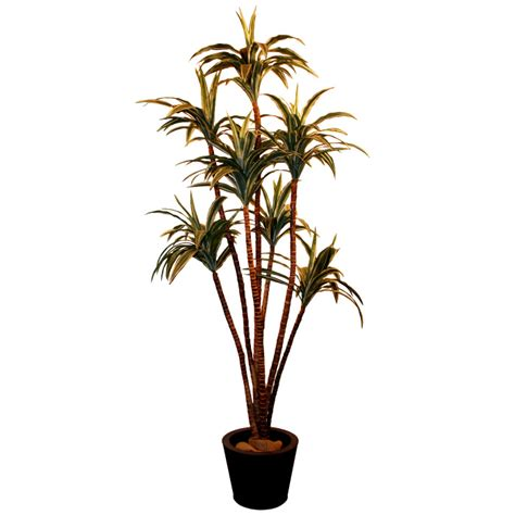 Decorative Palm Trees by Casino Event Blackjack Organisation Of