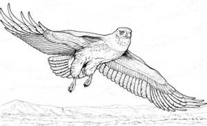 hawk coloring pages flying hawk coloring page supercoloring