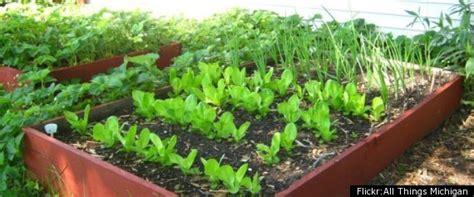 easy garden vegetables easy garden ideas vegetables modern home exteriors