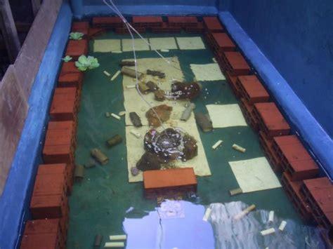 Seri Budi Daya Lobster Air Tawar cara budidaya lobster air tawar potensi budi daya lobster