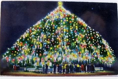 world s largest living christmas tree why i love