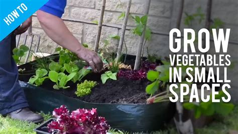 how to grow garden vegetables in small spaces youtube