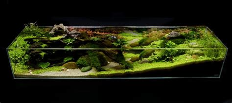 the green machine aquascape your tanks james findley practical fishkeeping magazine