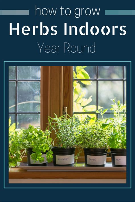 how to grow herbs indoors how to grow herbs indoors year round gardening know how