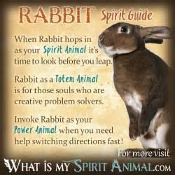 Rabbit spirit totem power animal symbolism meaning 1200x1200