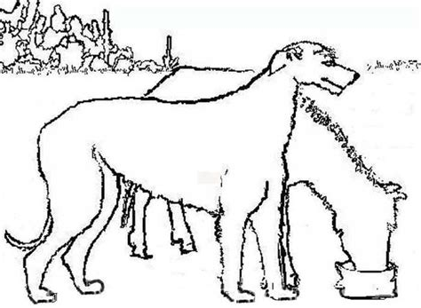 miniature horse coloring page color book irish wolfhound with miniature horse