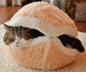 Cat Hamburger Pillow by 92 Best Cuddle Time Images On Animals