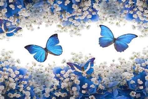 imagenes de mariposas blancas volando mariposas volando entre flores azules y blancas 50160