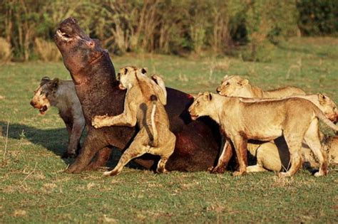wild animals fighting funny collection world