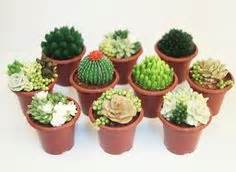 Mini Cactus 3178 by Here S A Decorating Tip Guide To Piping Buttercream