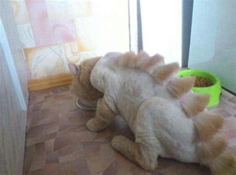 Dino Cut the big cats animal haircuts craze sees pets turned into predators but is it cruel
