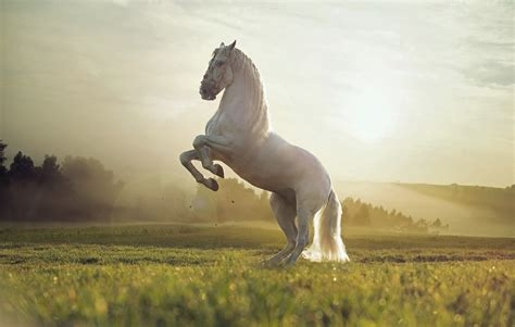 wallpaper horse cute animals sunset animals 4576