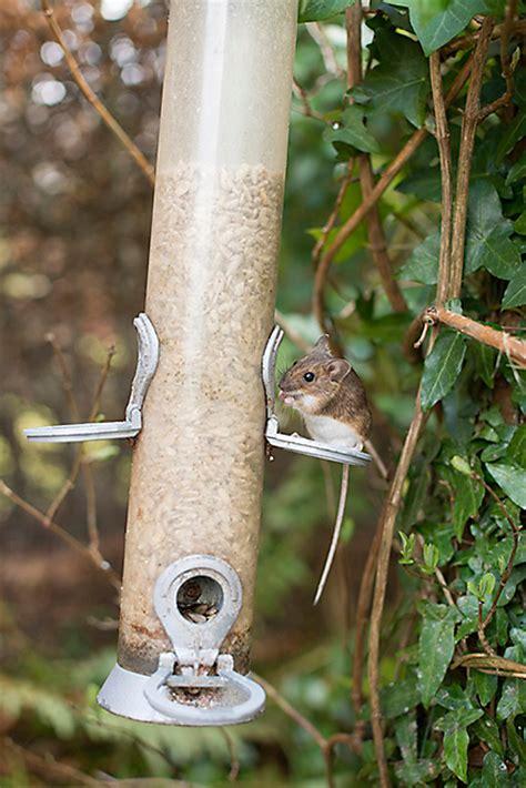 do bird feeders attract mice