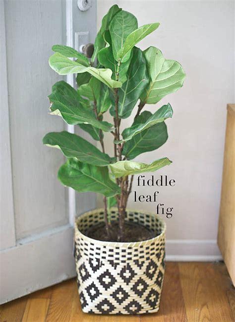 choosing   indoor plants   interior