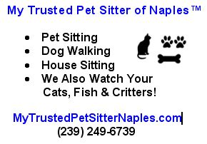 going rate for house sitting with pets going rate for house sitting with pets 28 images in home overnight sitting rates