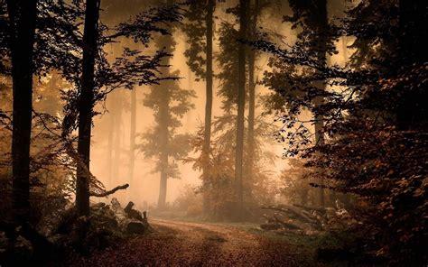 autumn mist   forest hd wallpaper wallpaper studio