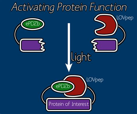protein activation team johns wetware lightproject 2012 igem org