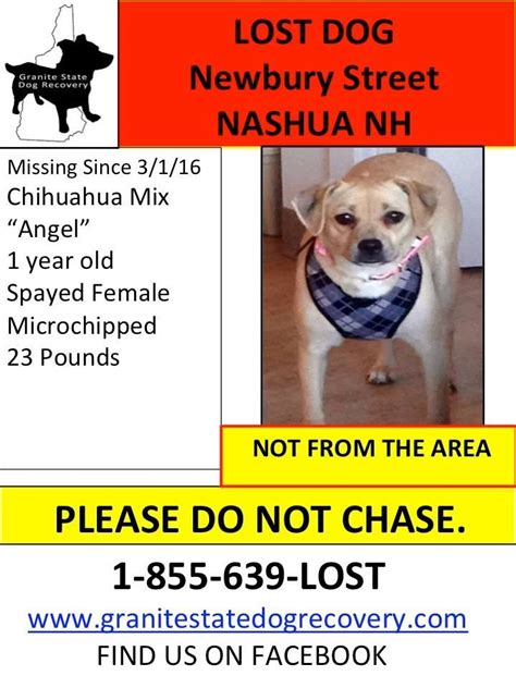 granite state recovery 132 best lost dogs nh images on granite state recovery and survival tips